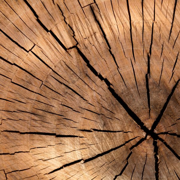 Holz_Panelit